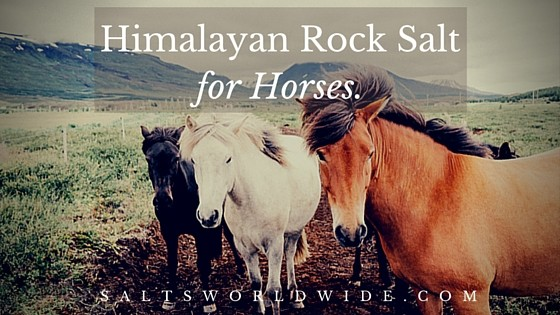 Himalayan Rock Salt for Horses